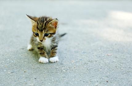 энтеросгель для кошек