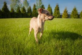Энтеросгель для собак: дозировка и инструкция по применению